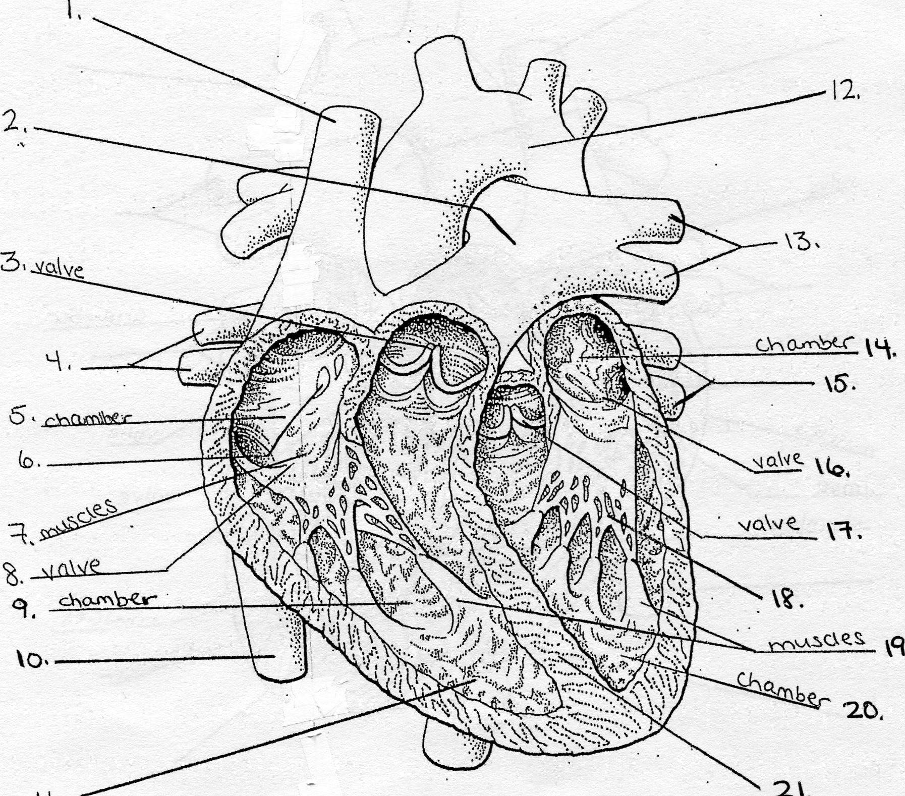 Heart diagram practice radio wiring diagram old anatomy physiology cp1 period 1 and period 3 mrs coleman s rh colemanclasswebsite weebly com detailed heart diagram heart diagram practice quiz ccuart Image collections